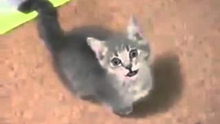 Смешные коты!!! Забавный котенок, Funny cats, Прикольные, ржачные,веселые коты,кошки ,котята1