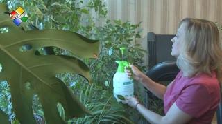 видео Как сделать зимний сад в квартире своими руками