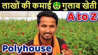 फूलों की मालामाल खेती 🌹🌹 गुलाब खेती   Biggest Hi-Tech Rose Farming Business in India