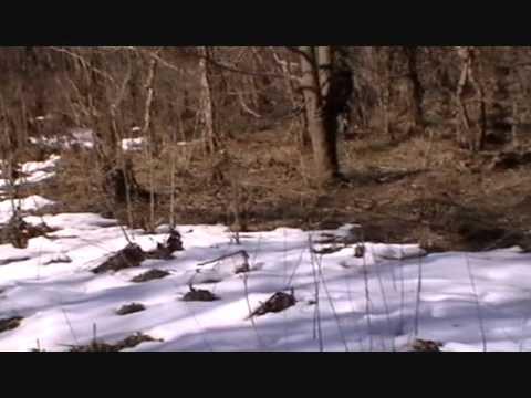 Rabbit hunting in Henrico, Va