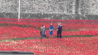 Prince William, Prince Harry, Princess Kate at Tower of London 05.08.2014
