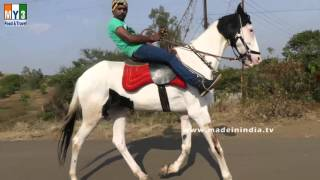 HORSE RIDING | WHITE HORSE RIDING ON ROAD