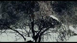 Siberian Education (2013). The wolf