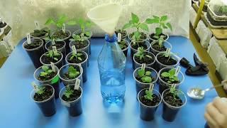 видео Все для выращивания рассады