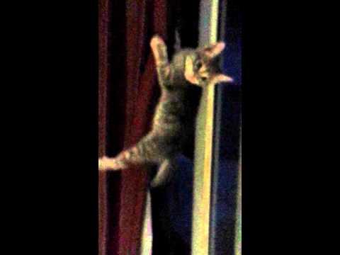 Curtain Climber