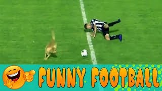 Dog Invades Pitch and Tackles Football Player