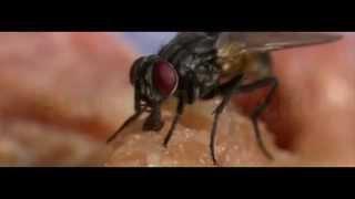 Чем опасны мухи, какие болезни переносят мухи