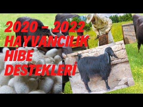 %100 - %50 HİBE / Hayvancılık Yatırımlarına Hibe Desteği 2020-2022