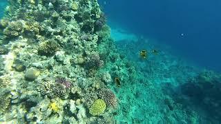 Sharm El Sheikh Red sea Egypt Snorkeling Reefs Sharks bay
