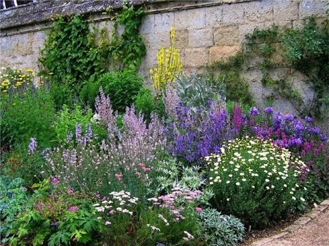 Аптечная или пряная грядка в саду. Pharmacy or spice plants in the garden