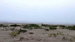 Ocean Park Beach hosts the largest bird population on the Washington coast, that I have seen.