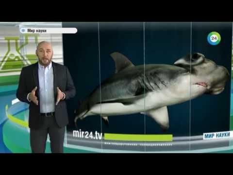 Как появляются новые виды животных