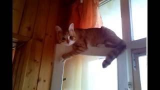 видео Сетка на окна от кошек