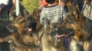 Шоу собак в Пакистане: от ши-тцу до немецких догов (новости)