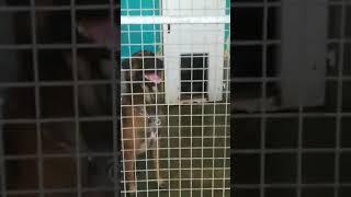JCG - HORS SERIE Présentation des chiens et chats