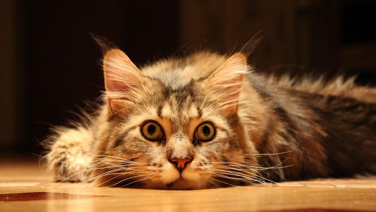 Funny Cats Live Stream