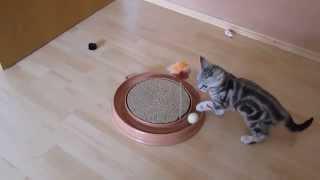 Самая лучшая в мире игрушка для кошек
