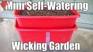 DIY Mini Self-Watering Wicking Garden