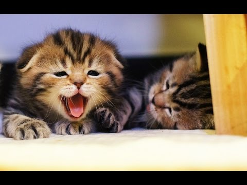 Funny Cats  and Cute Kittens playing  | New Funny Kittens  Epic Compilation