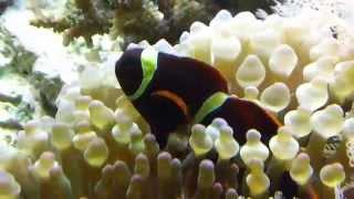 Biocube Reef Update 7/2/14