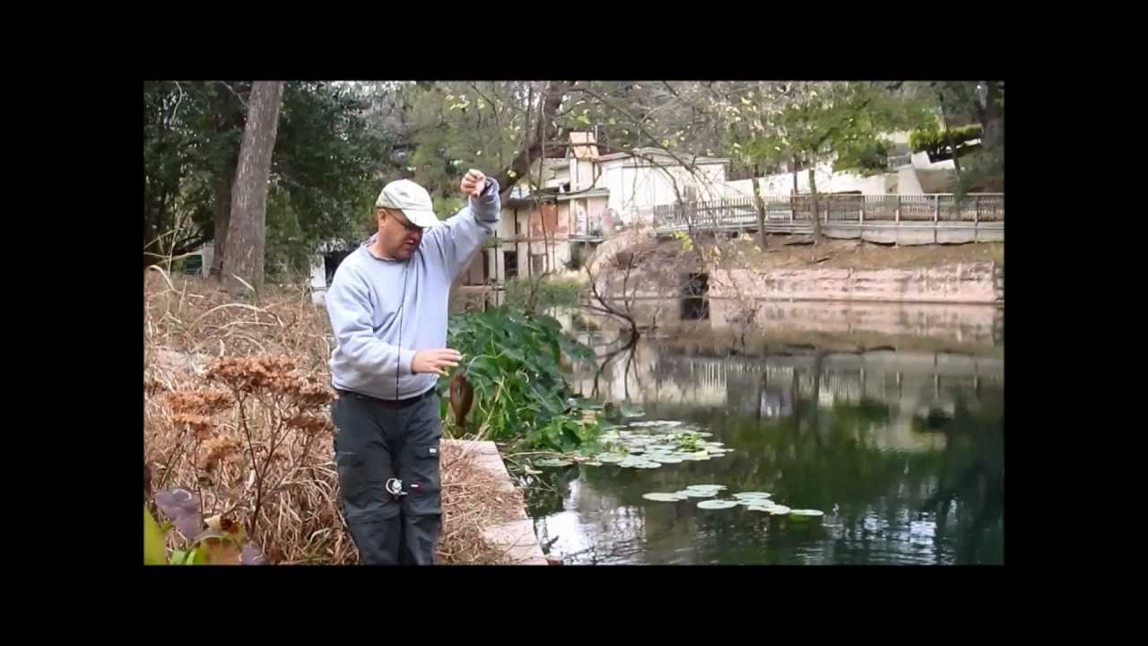 Fishing for red spotted redbreast sunfish at landa park for Texas parks and wildlife fishing report