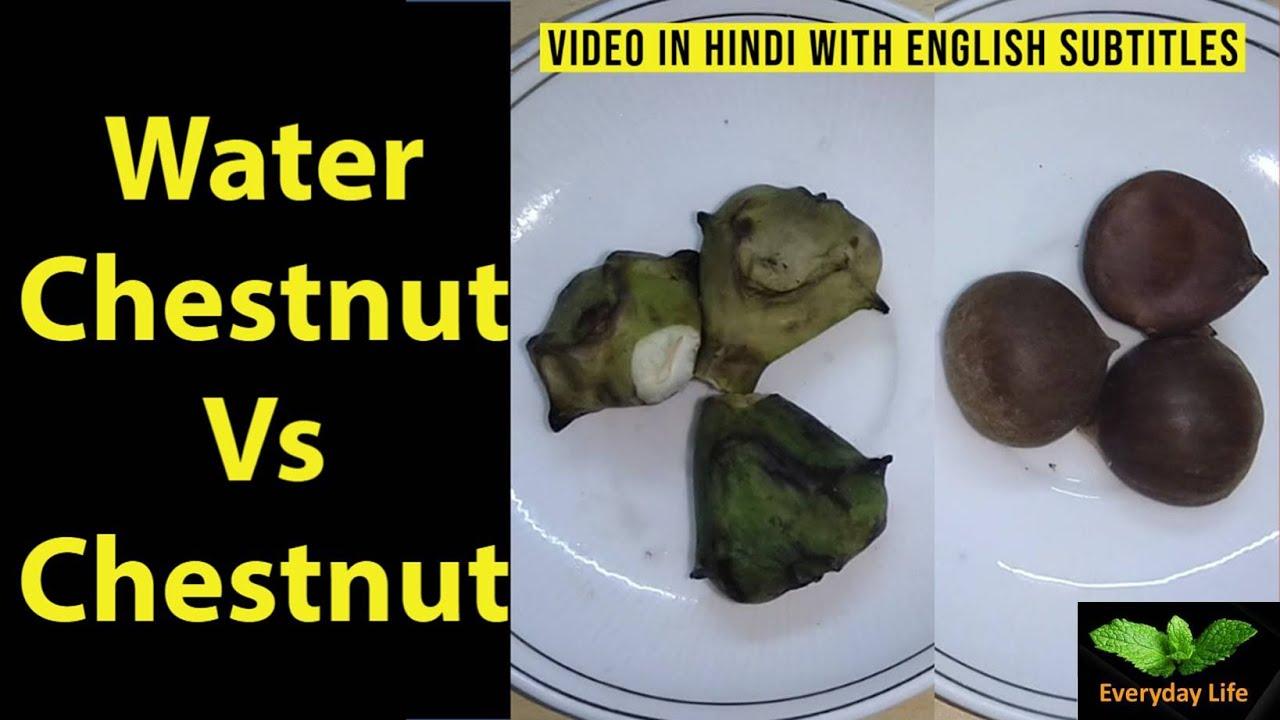 Download Water Chestnut Vs Chestnut |  सिंगाड़ा Vs  चेस्टनट |  Singhara | शाहबलूत | Everyday Life #171