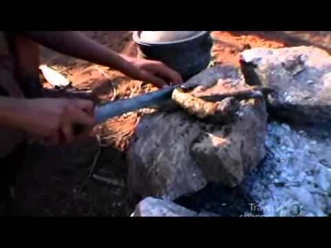 warthog anus