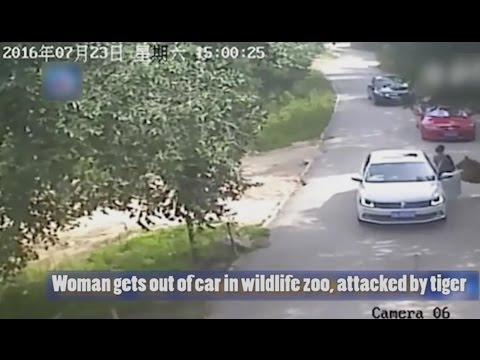 CCTV: Woman mauled to death by tiger after getting out of car in wildlife zoo