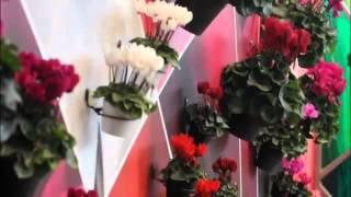 Horti Fair 2012