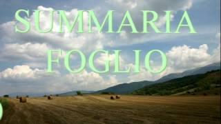 Davide Summaria - Foglio D