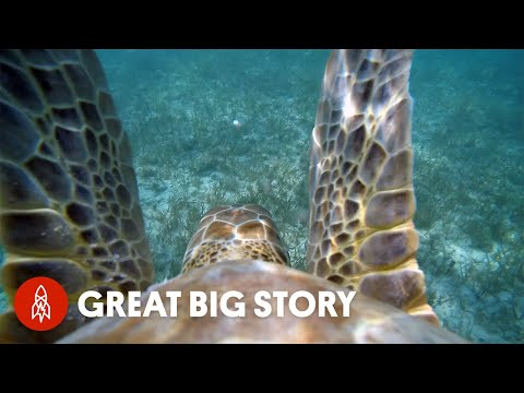 We're Swimming With Turtles (Again!)
