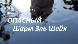 Опасный Шарм Эль Шейх. Последний день чуть не стал последним. Шампанское на пляже. Течение.