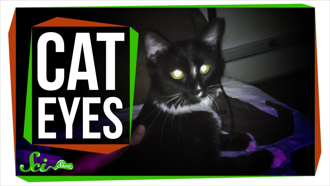 Why do cat eyes glow in the dark youtube - Why you shouldnt take the trash out at night ...