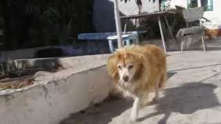В Днепропетровске живет пес, которому по человеческим меркам больше 200 лет