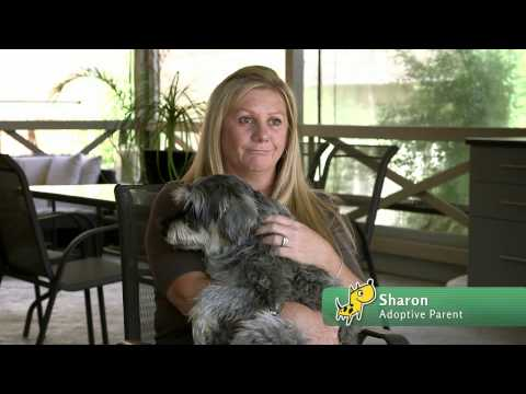 Noah's Bark Dog Rescue - short film