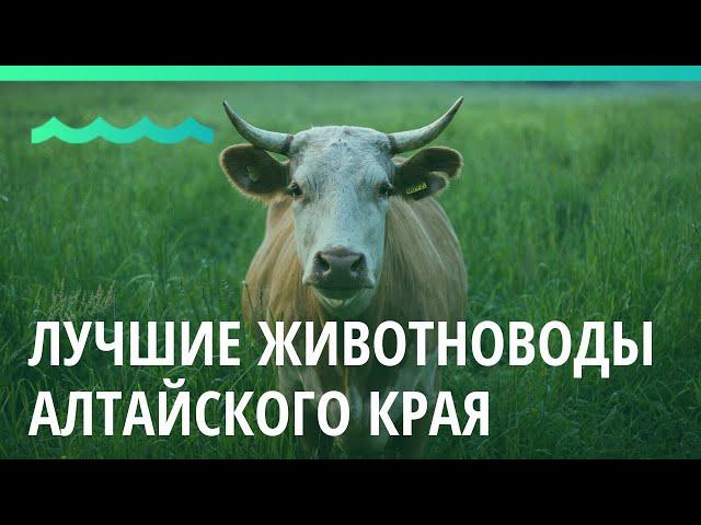 Награждение лучших животноводов Алтайского края прошло в Барнауле
