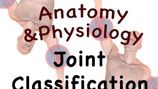 vuclip Joints and Articulations : Classification Structure (08:06)