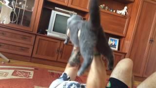 Жим кота 7 кг