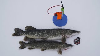 Дядя Фёдор жерлицы щуки и шашлык на льду Необычная зимняя рыбалка