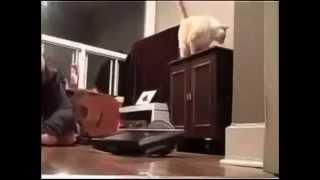 Видео Приколи с Животными   Смешные Животные 2014