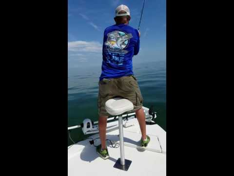 Jimmy's Fishing Charters Hudson, FL Cobia