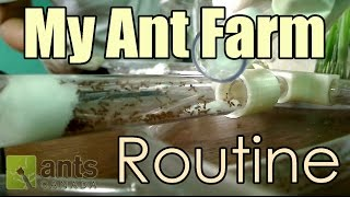This time lapse video covers what my typical daily/weekly ant routine is like for my large fire ant ant farm. Don't forget to VOTE for the name of this ant colony ...