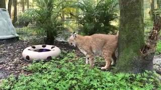 Q&A at Big Cat Rescue to see exotic cats 09 17 2019
