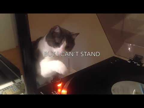 My Cat Lea Hates All Kind Of Music Except Pink Floyd