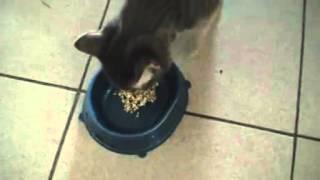 Зеленая гречка — обожают даже кошки!