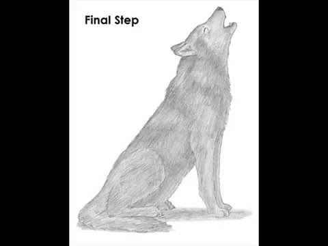 Pictures of wolves howling to draw