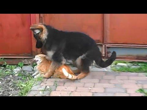 Собаки и щенки породы Среднеазиатская овчарка - купить из