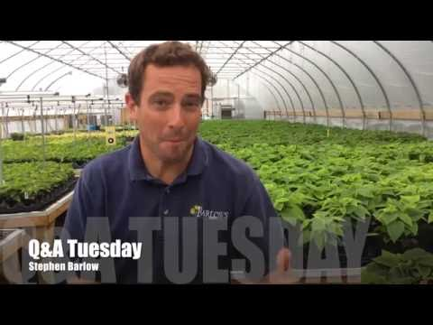 Q&A Tuesday with Stephen Barlow  Episode 023 How to treat Fireblight!