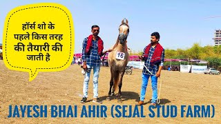 How to prepare your horse for the ring show (information by Jayesh bhai Ahir) ||kathiyawadi horse||