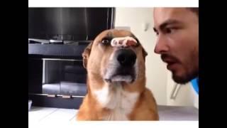 Focused Dog.